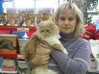C MATRIX Chapman StanLey V. Cream m pic6 exotic persian past kittens