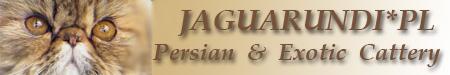 60#Jaguarundi