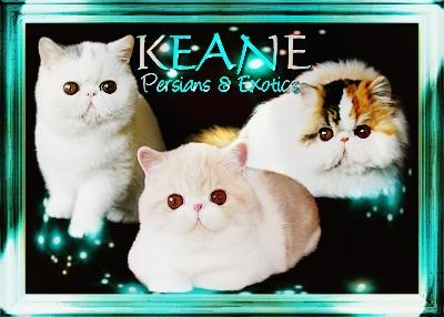 Keane Exotics