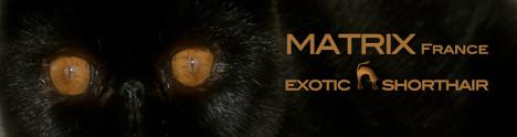 07#Matrix France