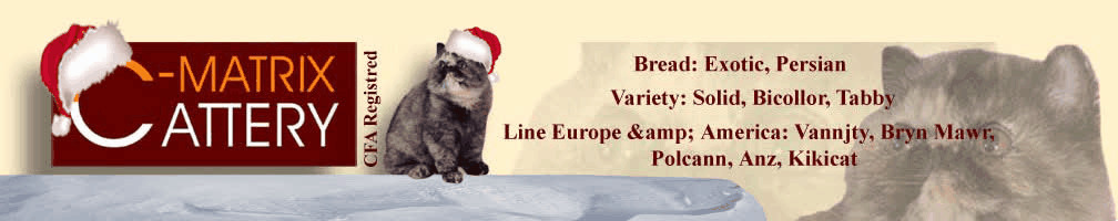 Breed: Exotic, Persian. Variety: Solid, Bicolor, Tabby. Lines Europe & America: Vannjty, Bryn Mawr, Polcann, Anz, Kikicat